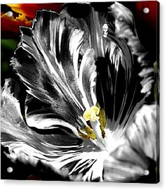 Flaming Flower 2 Acrylic Print by James Granberry