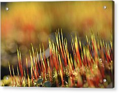 Flaming Moss Acrylic Print