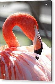 Flamingo Acrylic Print by Billie-Jo Miller