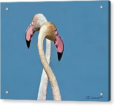 Flamingo Couple Acrylic Print