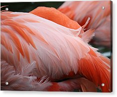 Flamingo Feathers Acrylic Print by Andrea  OConnell