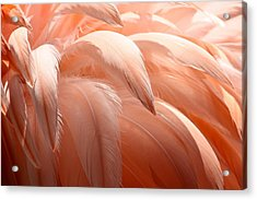 Flamingo Feathers Acrylic Print by Paulette Thomas