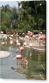 Flamingo Lagoon I Acrylic Print