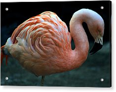 Acrylic Print featuring the photograph Flamingo by Tammy Espino