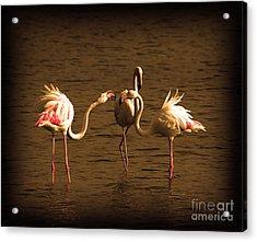 Flamingos Argue Acrylic Print by Radoslav Nedelchev