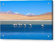 Flamingos At Lake Acrylic Print by Werner Büchel
