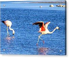 Flamingos Flamencos Acrylic Print by Sandra Lira