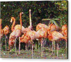 Flamingo's Acrylic Print by Fred Whalley