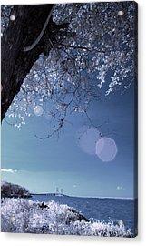 Flaring Sun Acrylic Print by Rovi Tavare