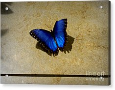 Flawed Beauti-fly Acrylic Print by Nicole Tru Photography