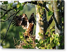 Acrylic Print featuring the photograph Fledgling Testing The Wind by Randall Branham