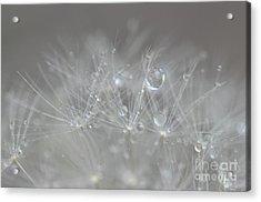 Fleur Cristalline Acrylic Print
