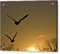 Acrylic Print featuring the photograph Flight At Sunset by Edward Peterson