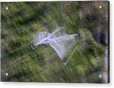 Flight Acrylic Print by Cathie Douglas