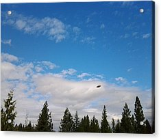 Flight In Blue Acrylic Print