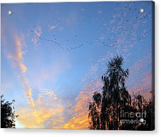 Flight Into The Sunset Acrylic Print by Ausra Huntington nee Paulauskaite