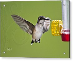 Flight Of The Angel - Hummingbird Frozen In Flight - Artist Cris Hayes Acrylic Print by Cris Hayes