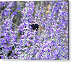 Flight Of The Bumble Bee Acrylic Print by Rhiannon Hamm