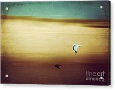 Flight Over The Beach Acrylic Print by Hannes Cmarits