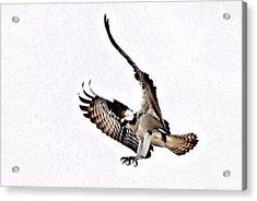 Flight Training Acrylic Print