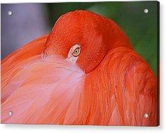 Acrylic Print featuring the photograph Flirty Flamingo by Myrna Bradshaw