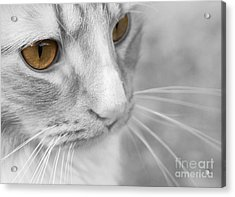 Acrylic Print featuring the photograph Flitwick The Cat by Jeannette Hunt