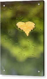 Acrylic Print featuring the photograph Float  by Richard Piper