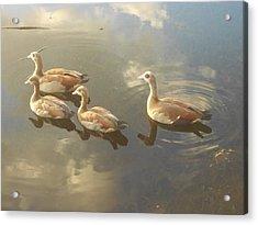 Floating Along Acrylic Print