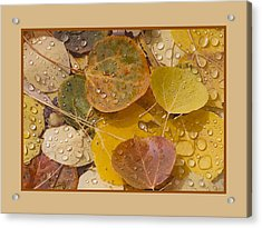 Floating Aspen Leaves Acrylic Print