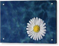 Floating Daisy Acrylic Print by Andrea Mucelli