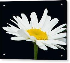 Floating Daisy Acrylic Print