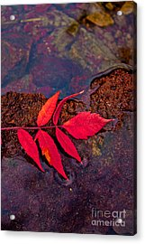 Floating Fall Sumac Acrylic Print