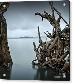 Floating Island Acrylic Print by Michael Howard