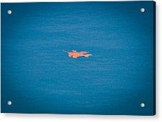 Floating Leaf Acrylic Print by Erica McLellan