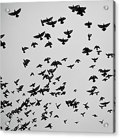 Flock Of Flying Pigeons Acrylic Print by Photography by Ellen L. Soohoo