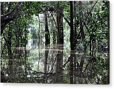 Flooded Amazon Rainforest Acrylic Print by Oliver J Davis Photography