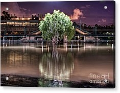 Flooded Tree Acrylic Print by Sonny Marcyan