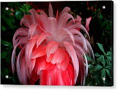 Acrylic Print featuring the photograph Flora And Fauna Number Two by Lon Casler Bixby