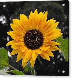 Flora Sunflower Acrylic Print