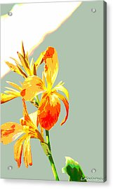 Floral Abstract Acrylic Print by Lauren MacIntosh