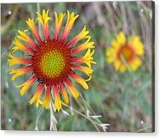 Floral Art Acrylic Print