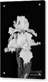 Floral Black And White Iris Flower Bouquet Acrylic Print
