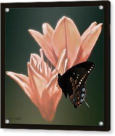Floral Butterfly Dance Acrylic Print by Debra     Vatalaro