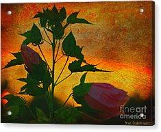 Floral Contrast Acrylic Print by Brian  Seidenfrau