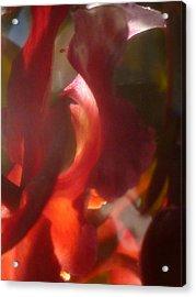 Floral Flamenco Acrylic Print