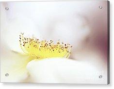 Floral Flow Acrylic Print by Jacky Parker