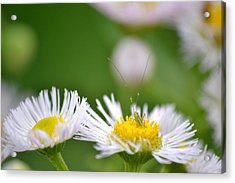 Acrylic Print featuring the photograph Floral Launch-pad by JD Grimes