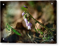 Floral Mantis Acrylic Print by The Stone Age
