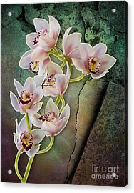 Floral Passion Acrylic Print