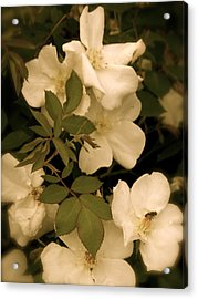 Acrylic Print featuring the photograph Floral Vignette by Robin Regan